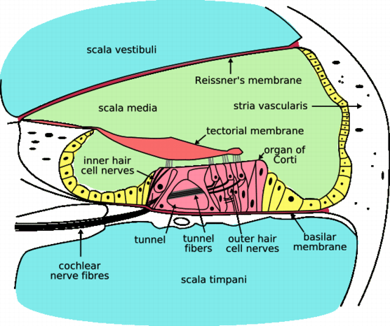 vad är sensorineural hörselnedsättning